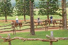Lanai Horseback Riding