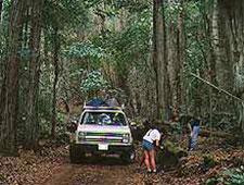 Lanai Trekking